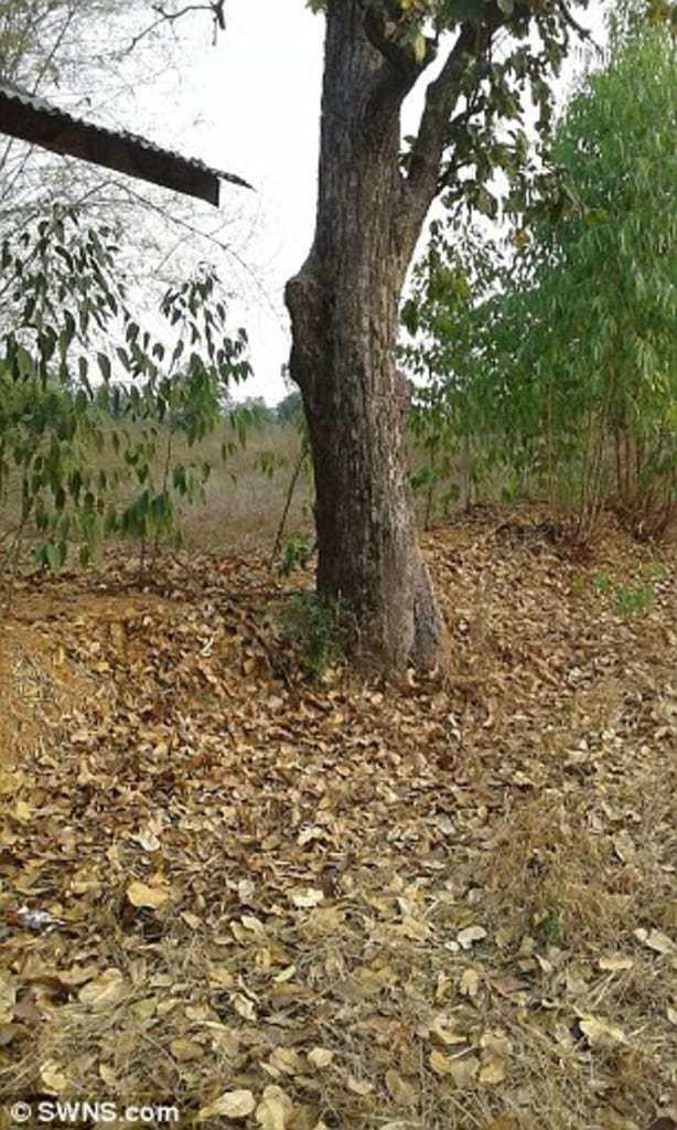 aidan-eucalipto